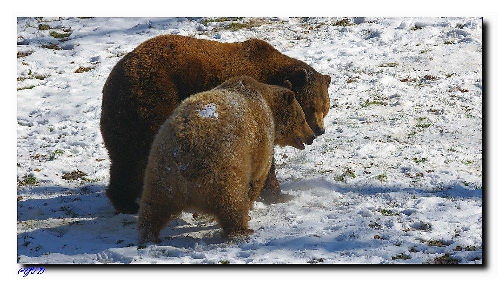 Bärenspass