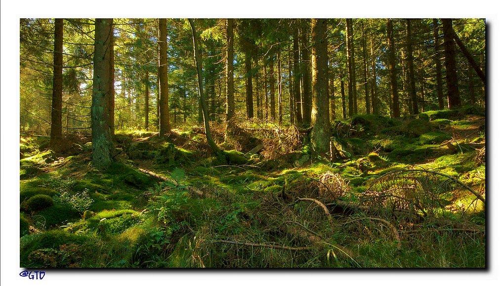 Rand des Harzer Hochmoores