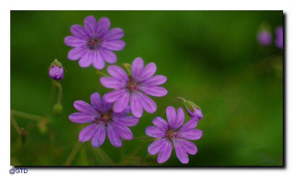 Mai 2014 - Blütenpracht